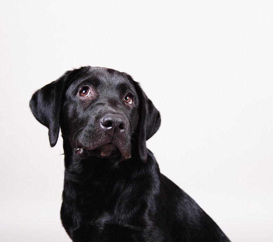 fotografo cani - ilenia costantino fotografa - 1