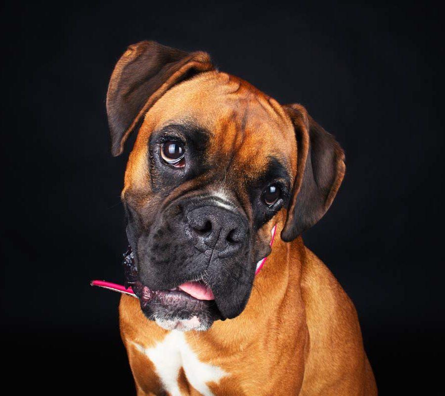 fotografo cani - ilenia costantino fotografa - 10