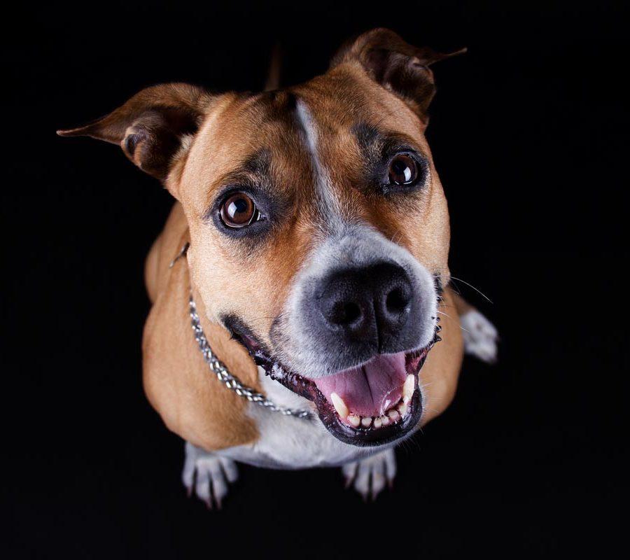 fotografo cani - ilenia costantino fotografa - 18