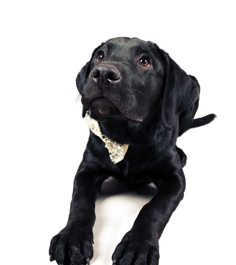 fotografo cani - ilenia costantino fotografa - 2