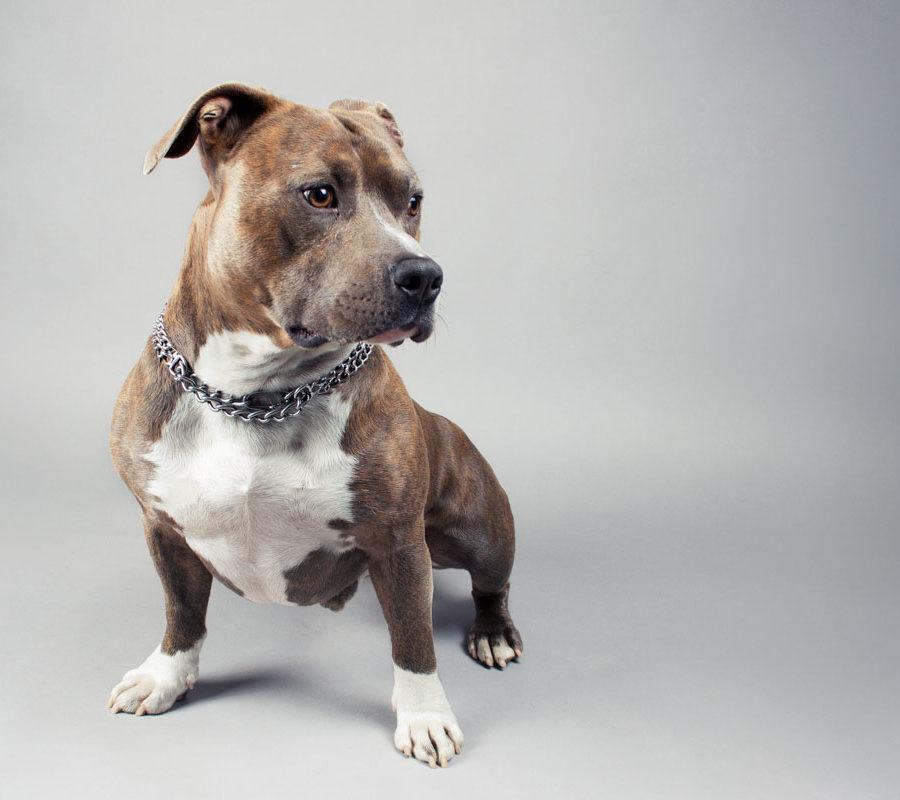 fotografo cani - ilenia costantino fotografa - 27