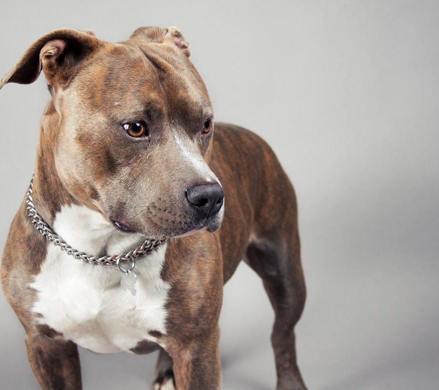 fotografo cani - ilenia costantino fotografa - 28