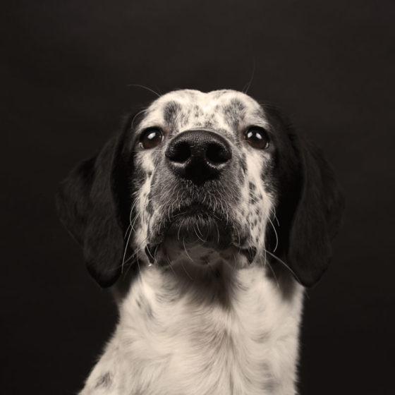 fotografo cani - ilenia costantino fotografa - 30
