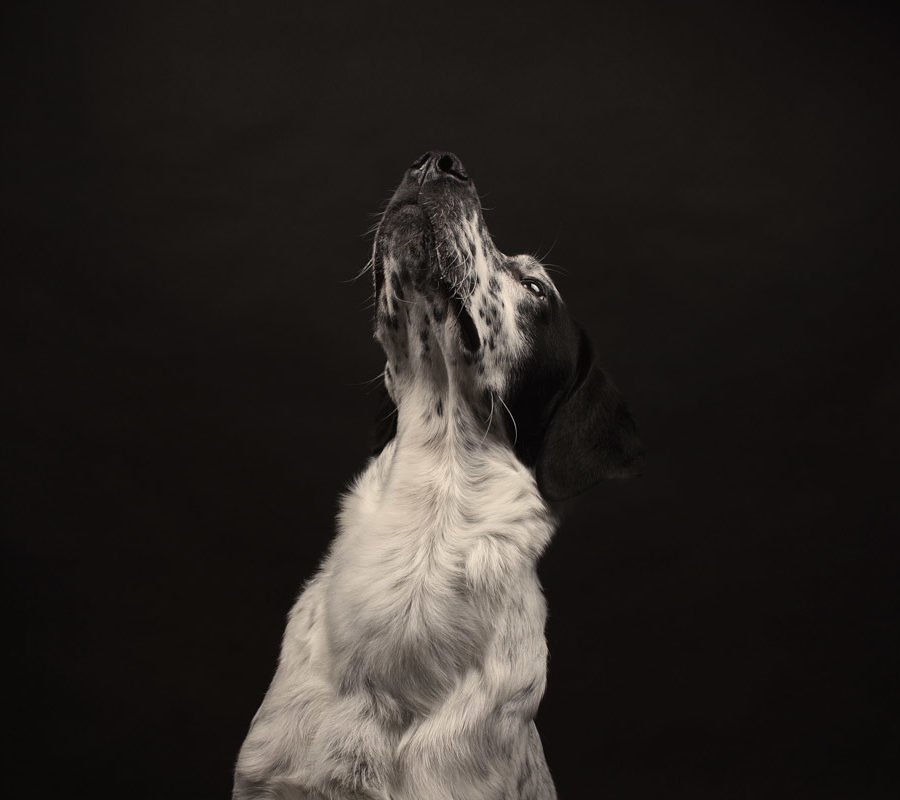 fotografo cani - ilenia costantino fotografa - 31