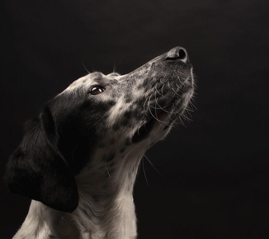 fotografo cani - ilenia costantino fotografa - 32