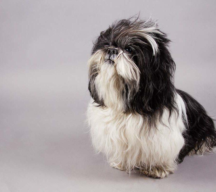 fotografo cani - ilenia costantino fotografa - 33