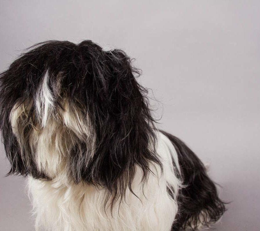 fotografo cani - ilenia costantino fotografa - 34