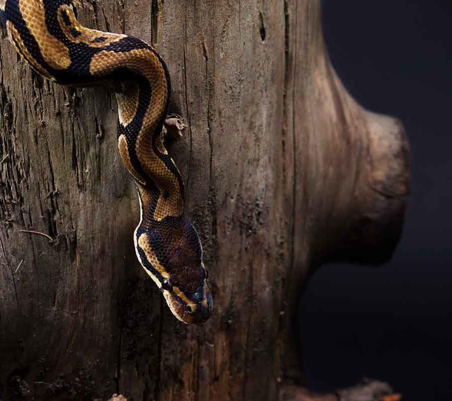 fotografo cani - ilenia costantino fotografa - 36