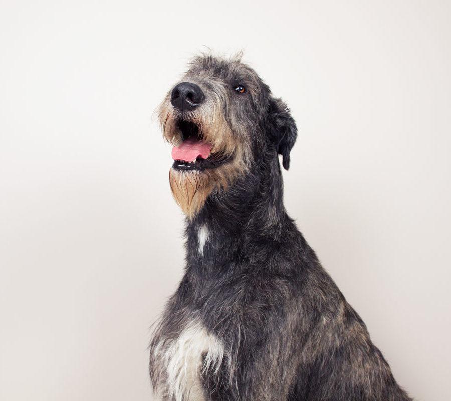 fotografo cani - ilenia costantino fotografa - 45