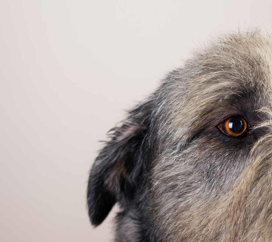 fotografo cani - ilenia costantino fotografa - 47