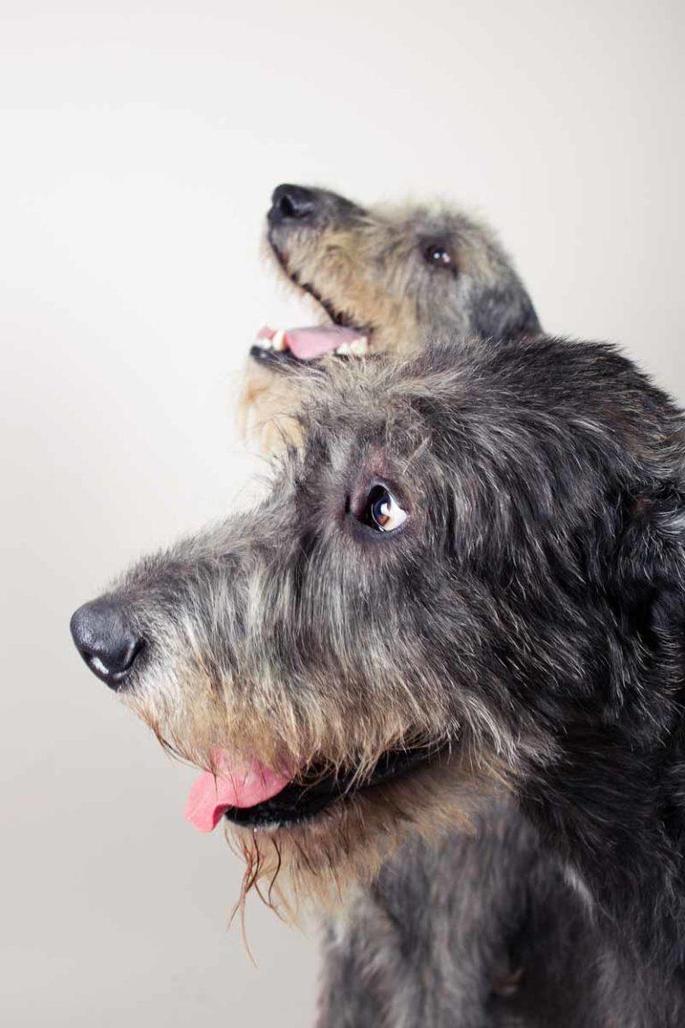 fotografo cani - ilenia costantino fotografa - 48