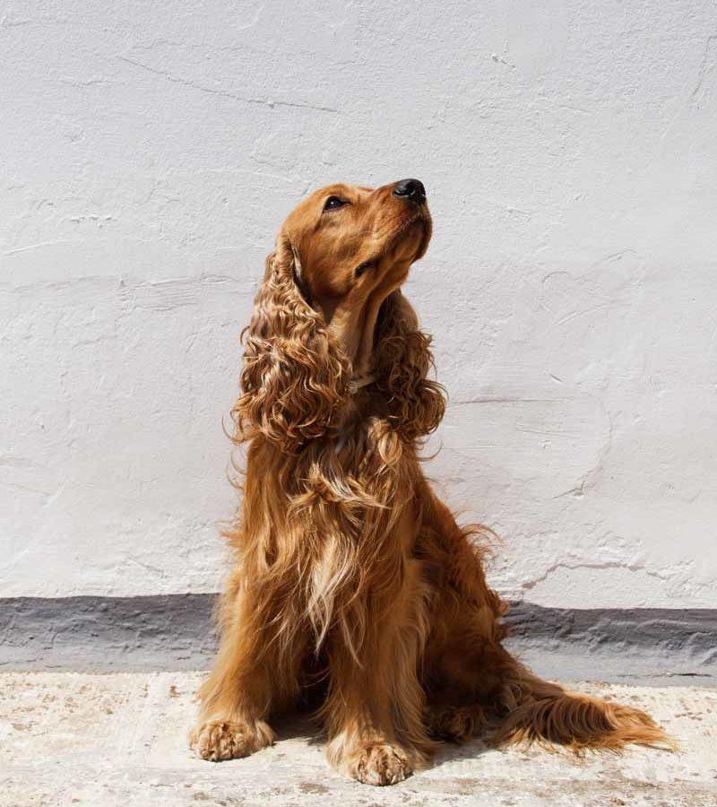 fotografo cani - ilenia costantino fotografa - 50