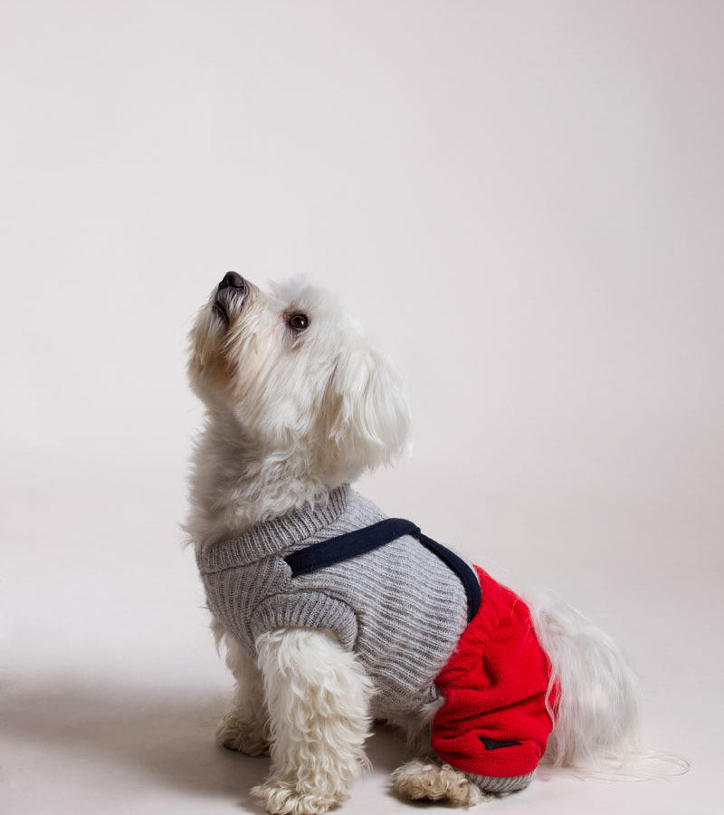 fotografo cani - ilenia costantino fotografa - 52