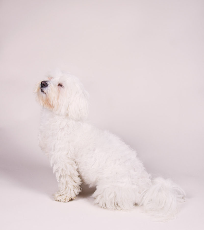 fotografo cani - ilenia costantino fotografa - 53