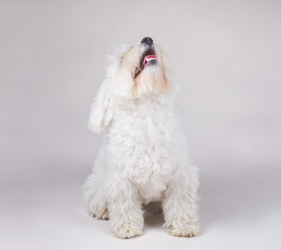 fotografo cani - ilenia costantino fotografa - 54