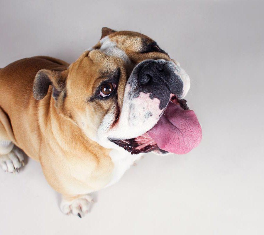 fotografo cani - ilenia costantino fotografa - 59