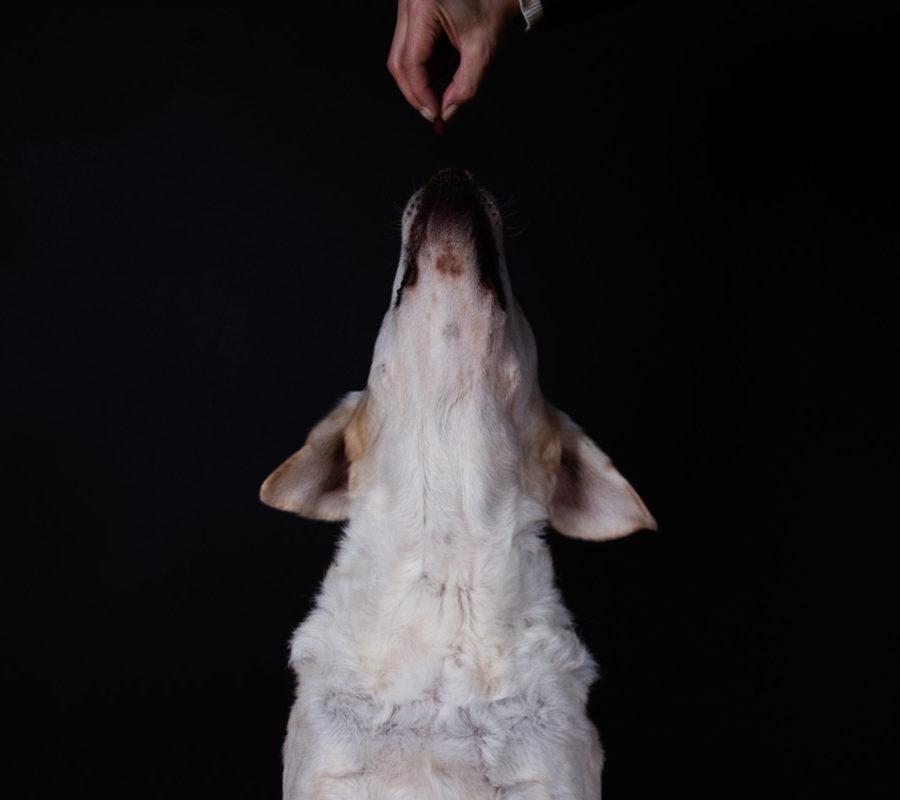 fotografo cani - ilenia costantino fotografa - 63