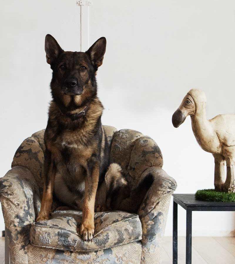 fotografo cani - ilenia costantino fotografa - 64