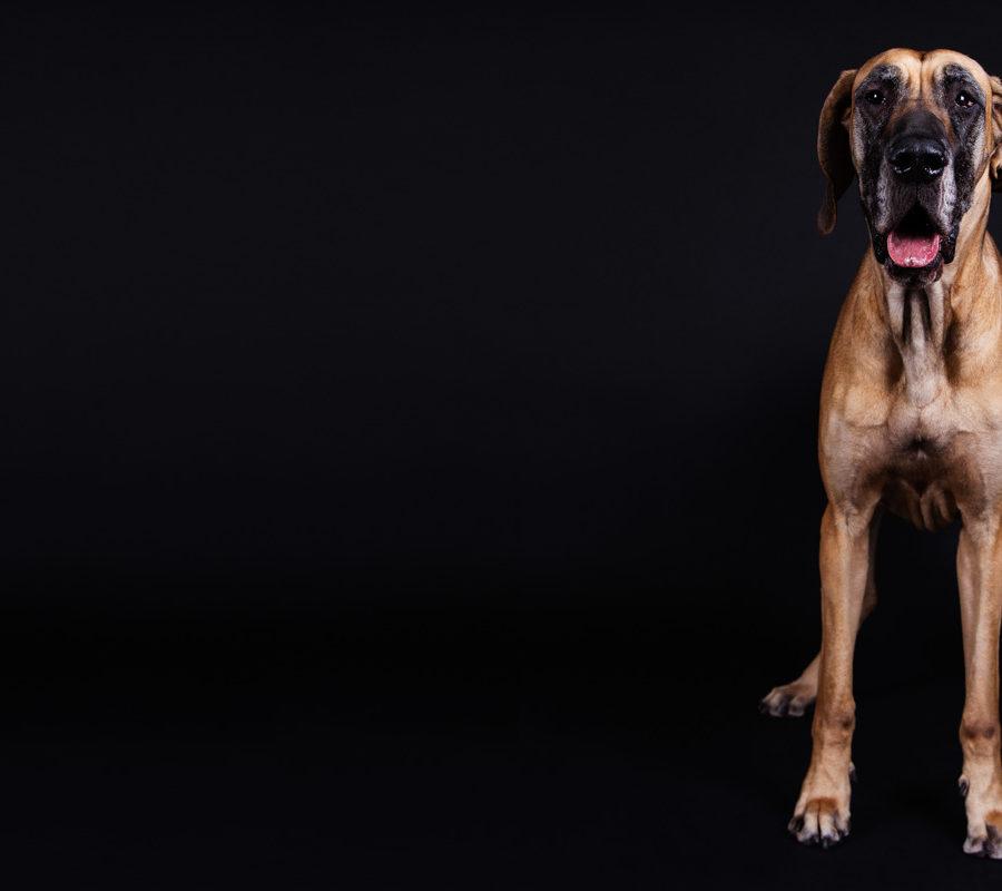 fotografo cani - ilenia costantino fotografa - 65