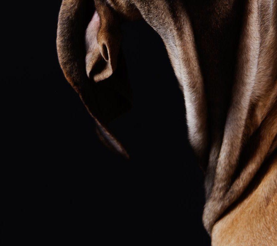 fotografo cani - ilenia costantino fotografa - 66
